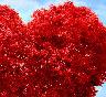 Falando de Amor – Um começo